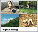 Physical training in TreT-Style!